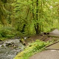 Balch Creek.- Lower Macleay Trail Loop