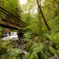 Bridge over Balch Creek.- Forest Park, Lower Macleay Trail Loop