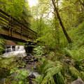 Bridge over Balch Creek.- Lower Macleay Trail Loop