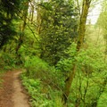 Wildwood Trail section of the hike.- Springville Trail