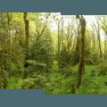 - Tryon Creek State Park, Cedar Trail Hike