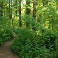 - Powell Butte Nature Park, Pioneer Orchard Trail