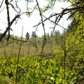 View looking into Lily Pond.- Tualatin Hills Nature Park Loop Trail