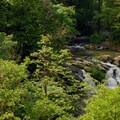 Lacamas Creek and Pothole Falls.- Lacamas Creek Loop Trail