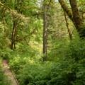 - Lacamas Creek Loop Trail