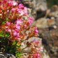 Unidentified species (help us identify it by providing feedback).- Table Mountain