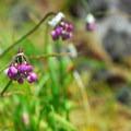 Unidentified species (help identify it by providing feedback).- Neahkahnie Mountain Hike