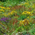 Summit meadow of wild flowers.- Neahkahnie Mountain Hike