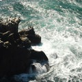 Cormorants on the Cape Falcon Rocks.- Cape Falcon Hike