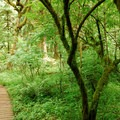 The trail leading up to Cascade Head.- Cascade Head Hike