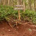 """Two roads diverged...""- Hamilton Mountain Hike"