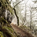 Portions of the trail become narrow.- Hamilton Mountain Hike