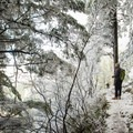 Wind and frost combine to create a surreal forest.- Hamilton Mountain Hike