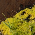Moss along the marshy waters of Green Lakes.- Green Lakes