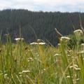 Wildflower meadow near the trailhead.- Green Lakes