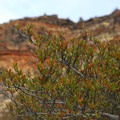 Unidentified species (help us identify it by providing feedback).- Dry River Canyon Hike