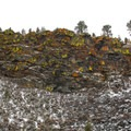 Lichens cover the basalt rimrock.- Dry River Canyon Hike