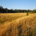 Open meadow just upstream from Dillon Falls.- Deschutes River Trail, Upper Reach Hiking Trail