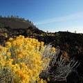 Gray rabbitbrush (Ericameria nauseosa).- Lava Butte, Trail of the Molten Land