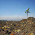 View west across the lava field.- Lava Butte, Trail of the Molten Land