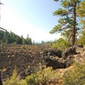 - Lava Cast Forest Interpretive Trail