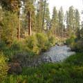View of Tumalo Creek looking southwest.- Shevlin Park, Aspen Hall Trail