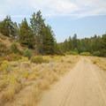 Dirt road back to Aspen Hall.- Shevlin Park, Aspen Hall Trail