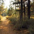 - Shevlin Park, Aspen Hall Trail