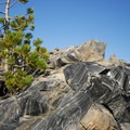 A lodgepole pine (Pinus contorta) finding a home in an inhospitable environment.- Big Obsidian Flow Interpretive Trail