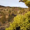 - Lower Whychus Creek Trail