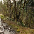 The beginning of trail follows an abandoned road to the Eagle Creek valley.- Eagle Creek Hike (Clackamas River Tributary)