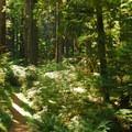 - Alder Flats Hike + Campsites