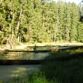 Dry Creek and Pond.- Alder Flats Hike + Campsites