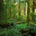 Typical low elevation northwest old-growth forest.- Alder Flats Hike + Campsites