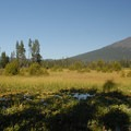 View of Mount Bachelor (9,068') from Mallard Marsh Campground.- Hosmer Lake Mallard Marsh Campground