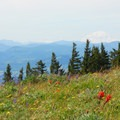 View looking north toward Mount Adams (12,280 ft).- Bald Butte Hike