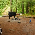 Backcountry campsite near the East Welches Road bridge.- Salmon River, Old Trail