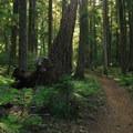 - Timothy Lake Loop Trail