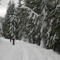The downhill return on the Beaver Marsh Loop.- Barlow Pass Sno-Park Beaver Marsh Loop