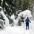Working through the fresh snow on the Beaver Marsh Loop.- Barlow Pass Sno-Park Beaver Marsh Loop