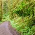 Leif Erikson Road.- Forest Park