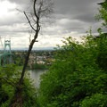 Viewing looking out over the St. Johns Bridge from the Ridge Trail.- Forest Park
