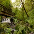 Bridge over Balch Creek.- Forest Park