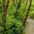Tryon Creek.- Tryon Creek State Park