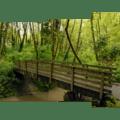 Bridge over Tryon Creek.- Tryon Creek State Park