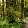 - Tryon Creek State Park