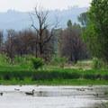 Ridgefield National Wildlife Refuge River S Unit.- Ridgefield National Wildlife Refuge