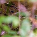 Unidentified species (help us identify it by providing feedback).- Ridgefield National Wildlife Refuge