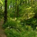 - Powell Butte Nature Park