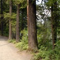 - Lacamas Creek Park
